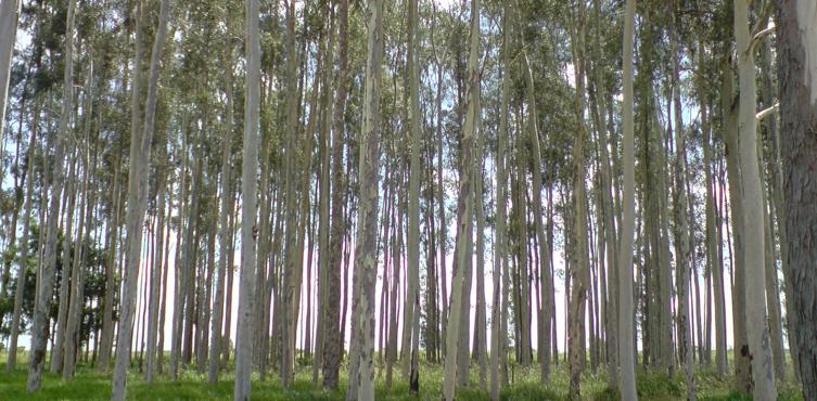 Florestas de Produção